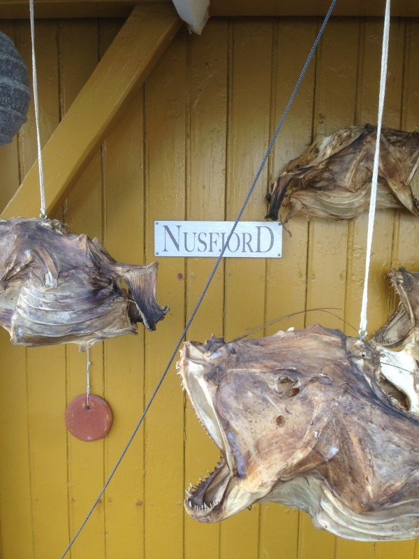 Horrifying dried fish hanging in front of the Nusfjord sing.