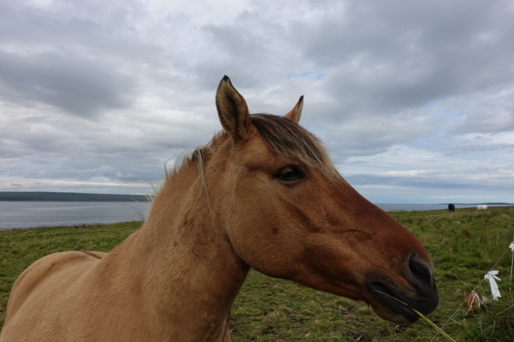Hest Ekkerøy 2017